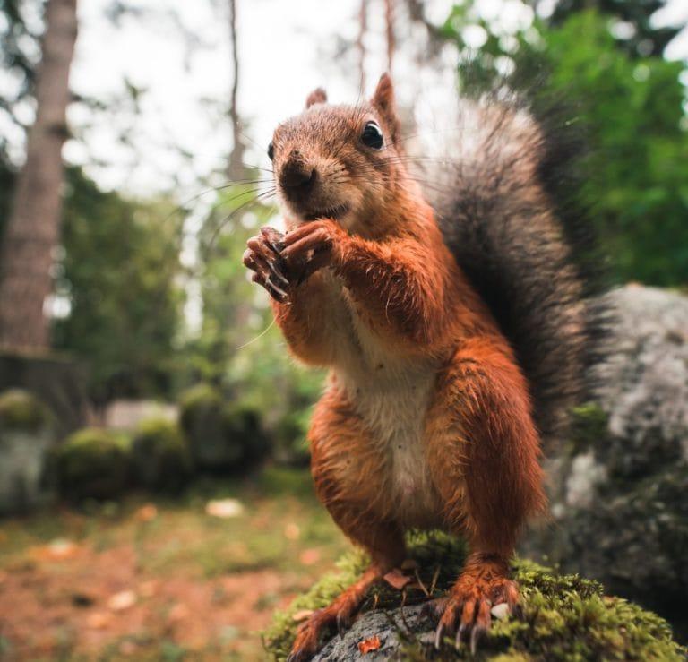 Squirrel ethics