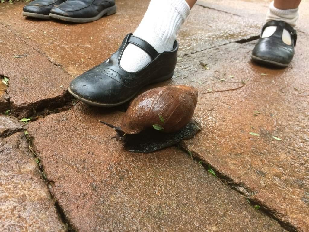 a snail next to a child's foot