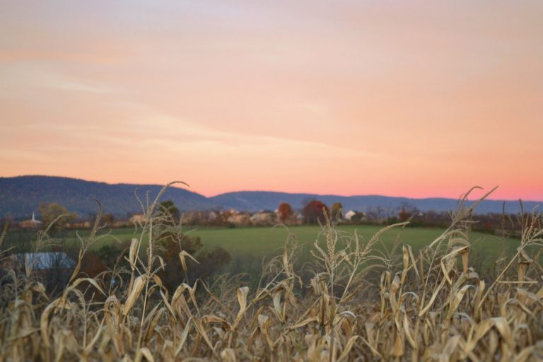 Bringing faith to farming in  Canada: The CFFO