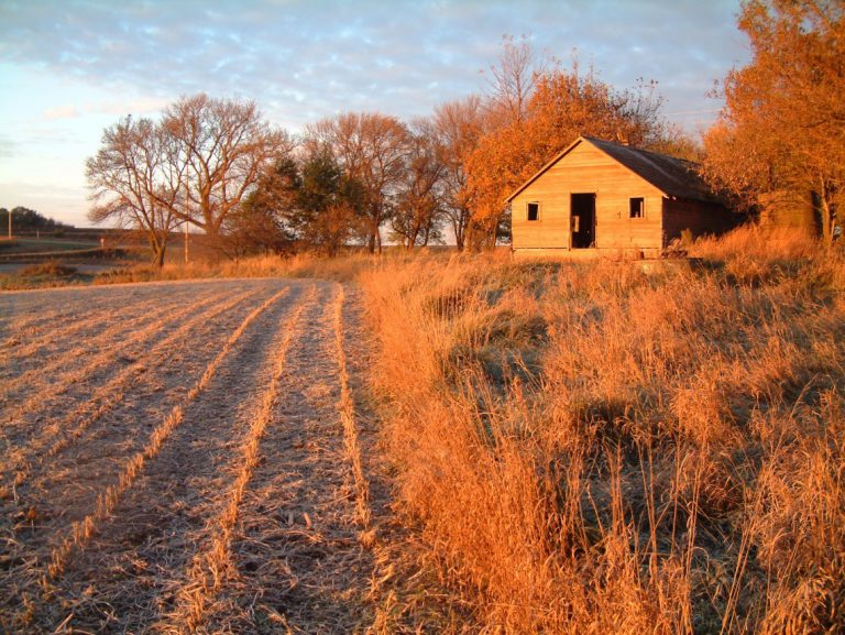 Into fields of joy